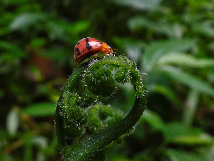 Ladybug. Mode super macro.