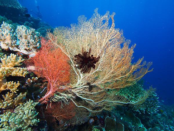 Bawah laut yenbuba | ©MayangPurwanto