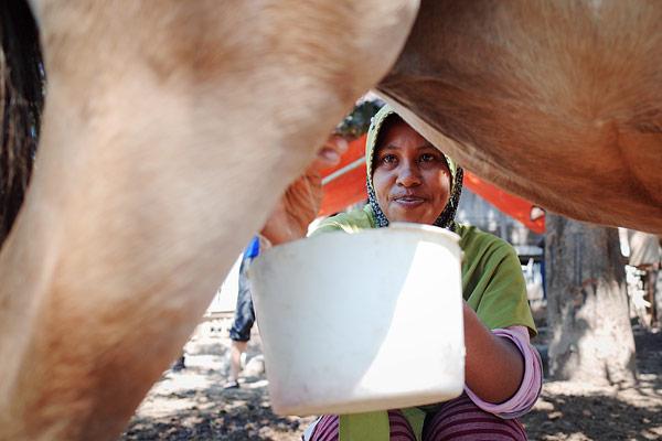Memerah susu kuda