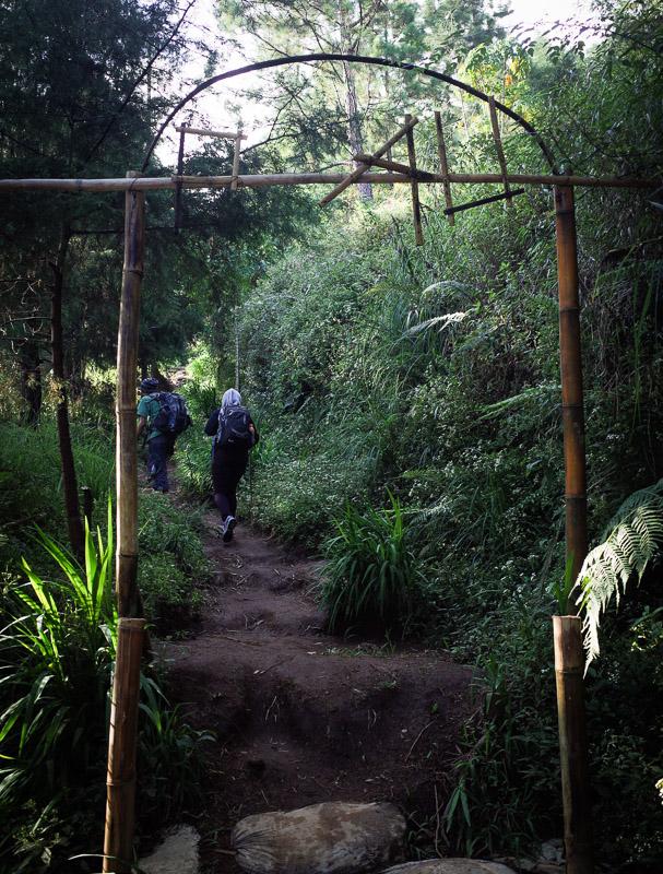 Sekitar dua puluh menit menyusuri kebun kita akan sampai di pintu hutan yang bertuliskan Prau. Tapi R nya hilang tuh hehe.