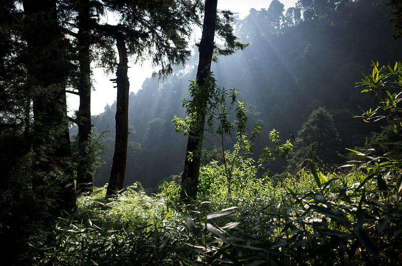 Menjelang sore, cahaya-cahaya bermain menembus hutan. Indah. Sekali. Sob.