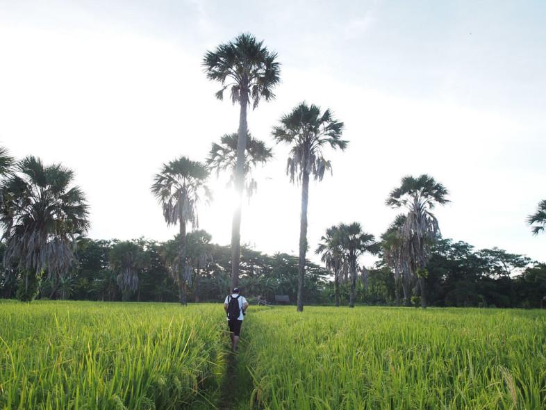 Sawah di sekitar Tanjung Lesung
