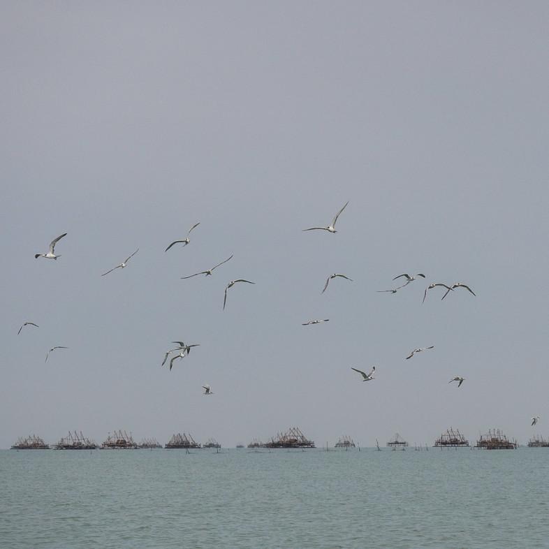 Burung camar sepanjang perjalanan ke Pulau Liwungan