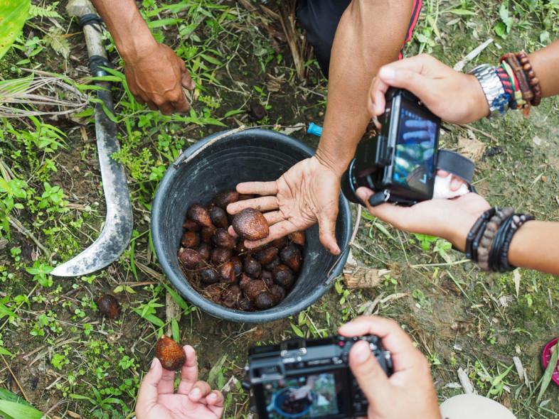 Agrowisata Salak Birus Tanjung Lesung