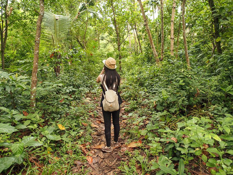 Masuk ke hutan liwungan