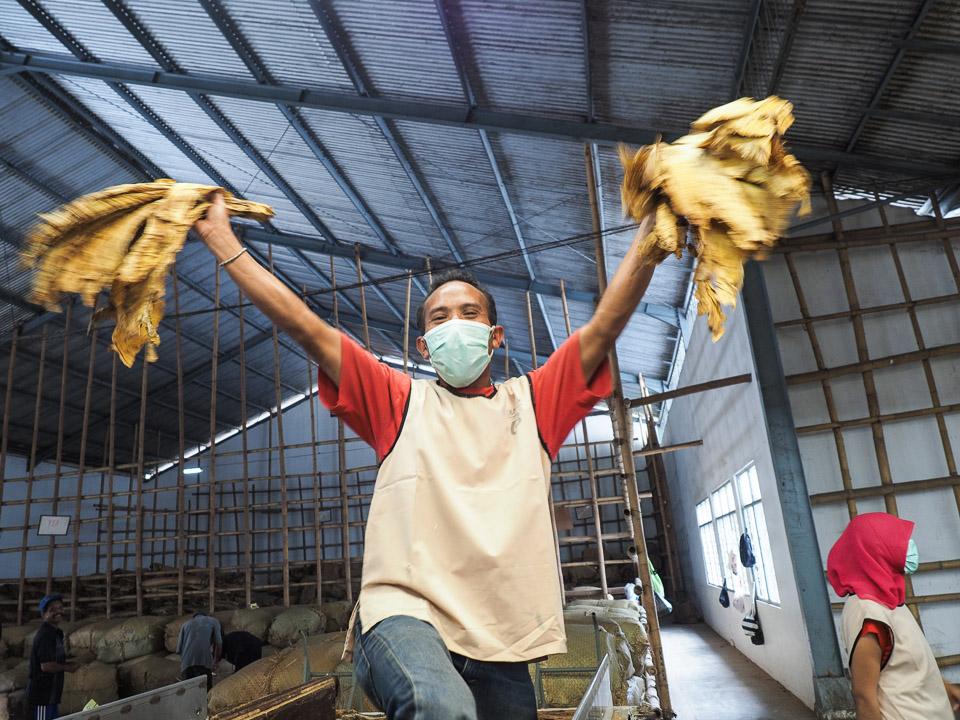 perkebunan tembakau di lombok