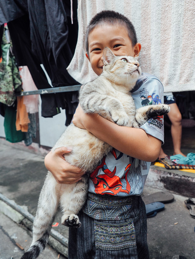 cat-of-thailand-17