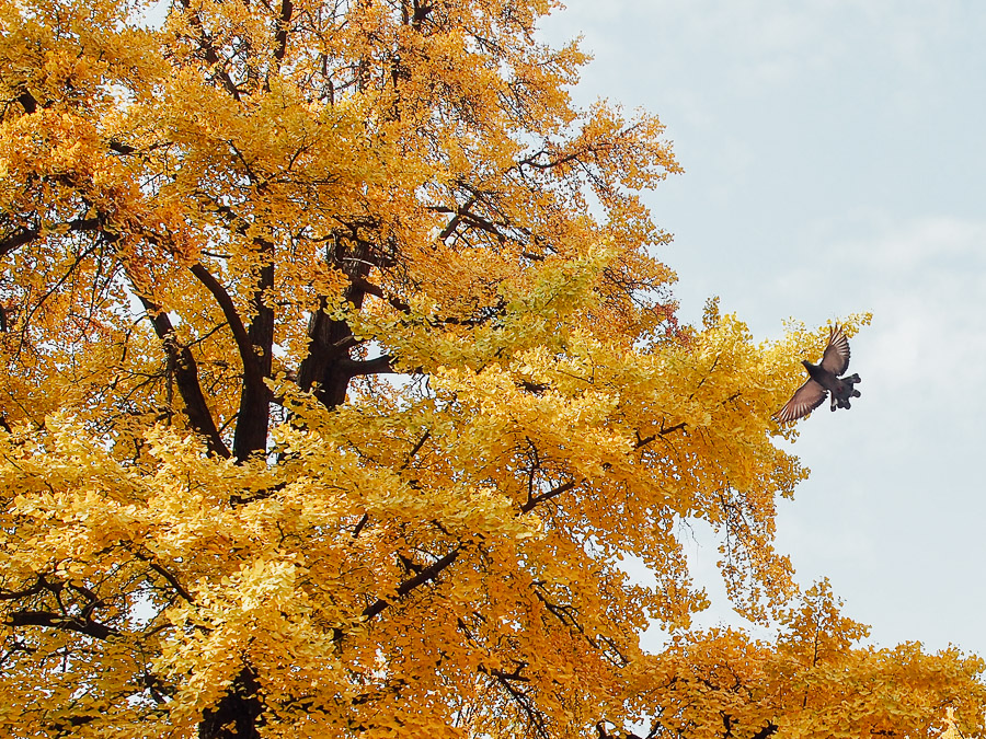korea-musim-gugur-november-auntumn-22