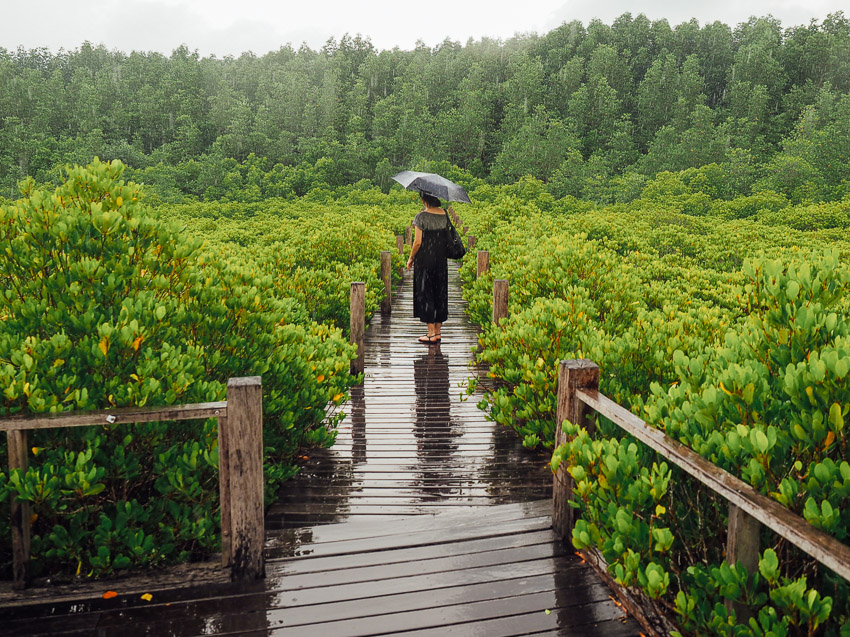 golden mangrove thailand rayong